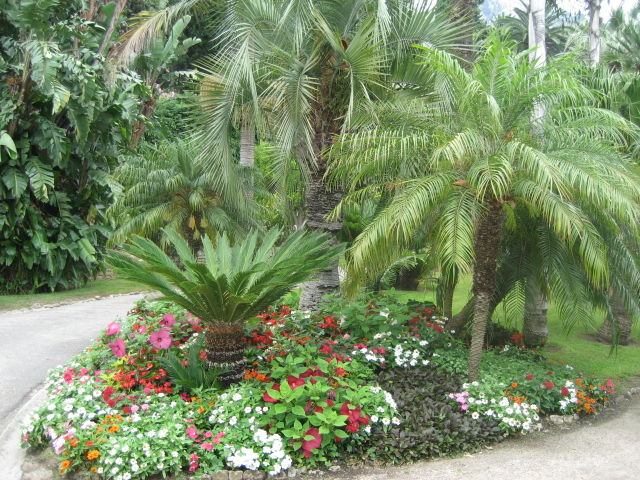 Mentone giardino maria serena una serra a cielo aperto - Piante tropicali da giardino ...