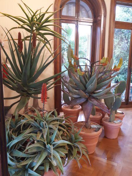 Crea il tuo giardino con le piante grasse nei colori della for Aiuola piante grasse