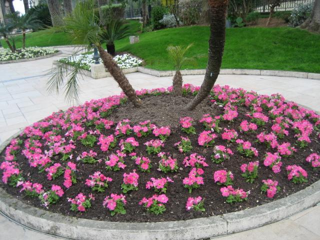 Monte carlo un arredo urbano invidiabile immagini di - Idee per aiuole giardino ...