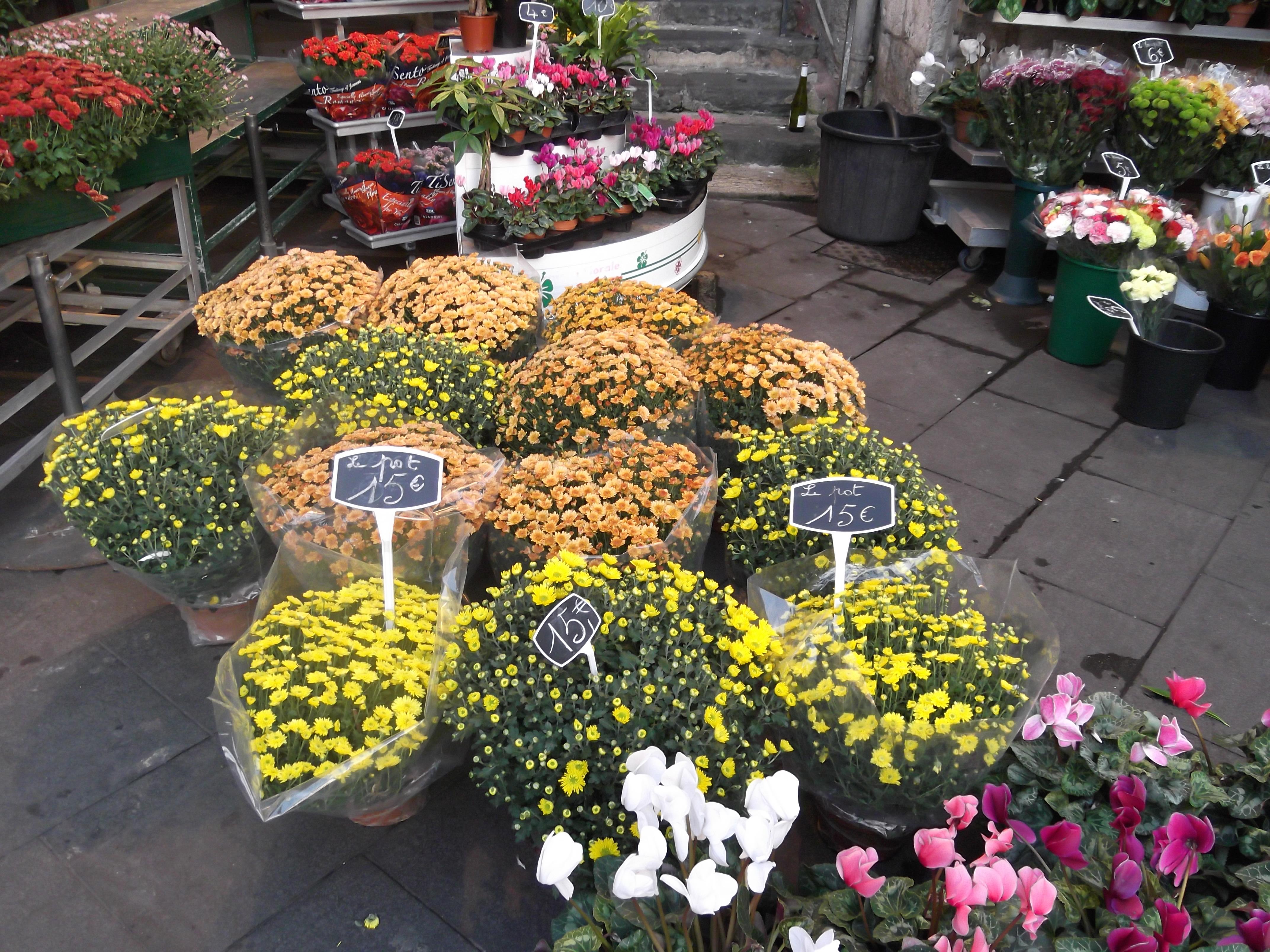 Confronto prezzi italia francia quanto costano crisantemi - Crisantemi in vaso ...