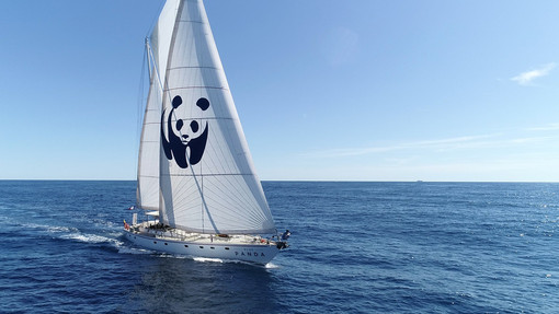 Blu Panda (sito WWF)