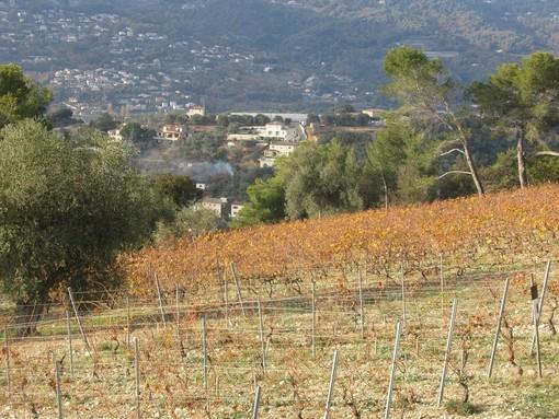 Vigne di Bellet