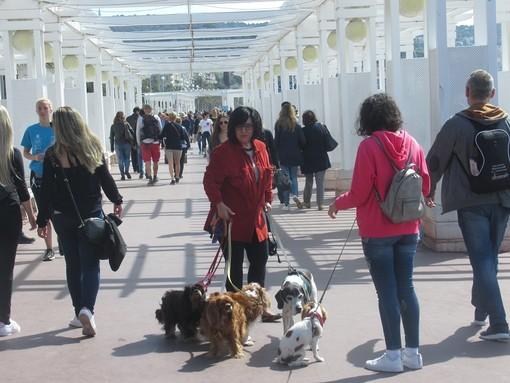 """""""Anche i cani fanno salotto"""" di Carla Antonucci"""