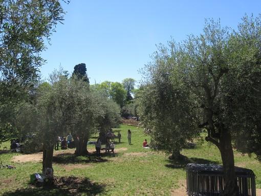 Cimiez, à l'ombre des oliviers