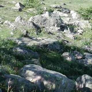 Col de la Cayolle foto di Danilo Radaelli