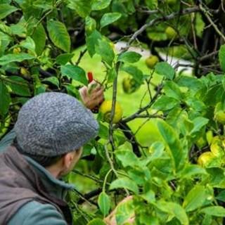 Come di curano gli agrumi? Corso gratuito a Menton