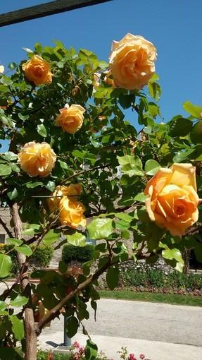 """""""Il tempo delle rose"""" di Nicole Geron"""