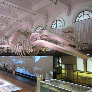 Il Museo Oceanografico di Monaco continua la promozione per le famiglie sino all'8 marzo