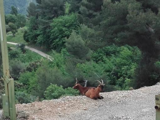 Escursione al Mont Chauve nelle fotografie di Danilo Radaelli