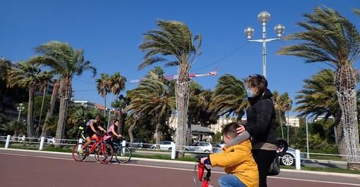 Palme sulla Promenade des Anglais, foto di Ghjuvan Pasquale