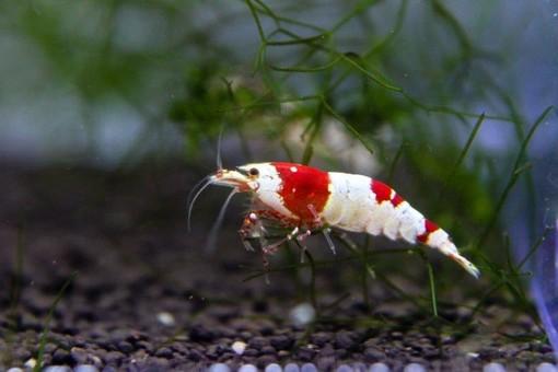 Petsfestival 2021: l'acquariologia è di casa
