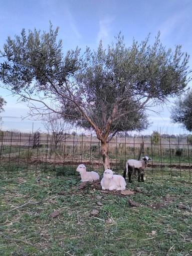 """La Penne, a pochi chilometri da Nizza un esperimento di """"permacultura"""""""