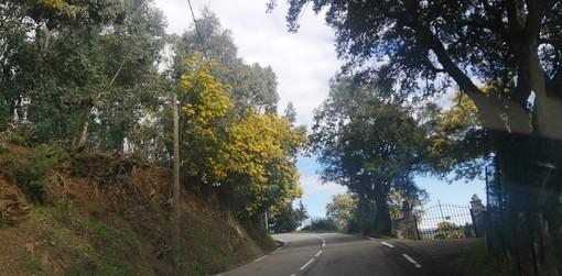 La Route du Mimosa nelle fotografie di Patrizia Gallo e Danilo Radaelli