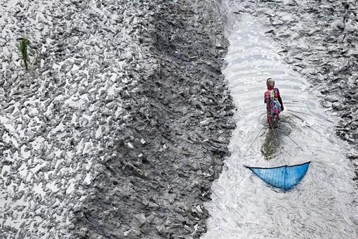Femme pêchant au filet sur un bras du Delta, Sud de Padmapukur, District de Khulna, Bangladesh