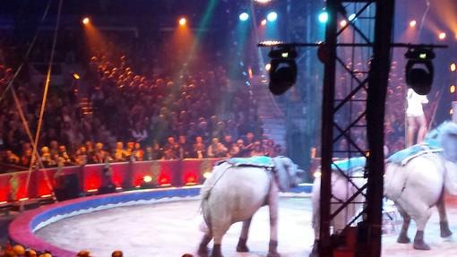 Ecco il Palmares dei premiati al 42^ Circo di Montecarlo, lo 'spettacolo più bello del mondo'