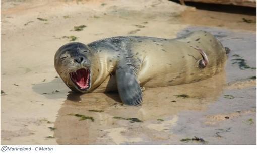 Marineland festeggia la nascita di un cucciolo di foca, che nome avrà?