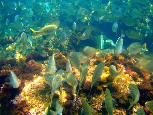 Roquebrune ospita la seconda edizione delle Giornate del Mare, dedicate alla tutela dell'ambiente marino