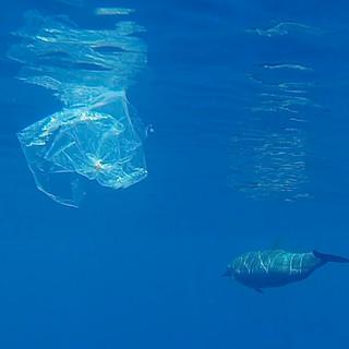 Monaco si impegna nella settimana della riduzione dei rifiuti: Ridurre - riutilizzare - riciclare