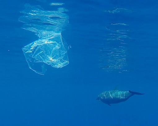 Lotta contro la plastica a Monaco: il 1 ° gennaio divieto per cotton fioc, bicchieri, posate e piatti di plastica