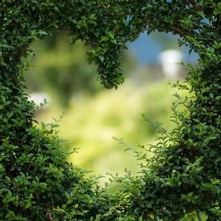 Anche il Principato di Monaco partecipa alla Giornata internazionale delle foreste