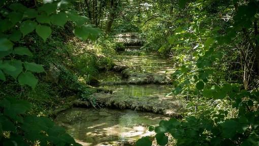 Parc Naturel Départemental du Sinodon