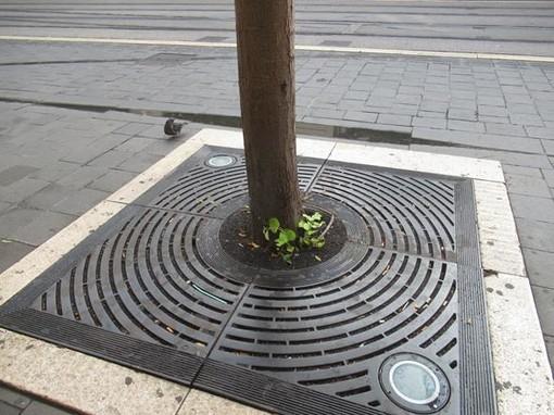 Alberi, asfalto ed erba
