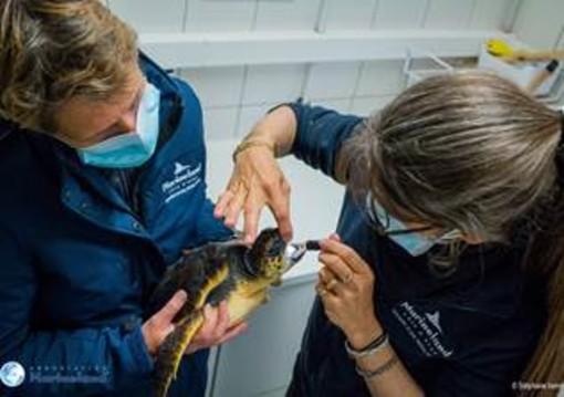 Marineland salva Lorella, la giovane tartaruga carretta carretta in difficoltà